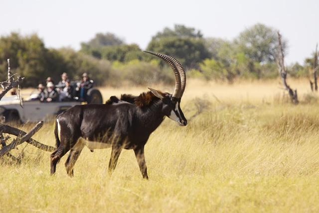Botswana 11
