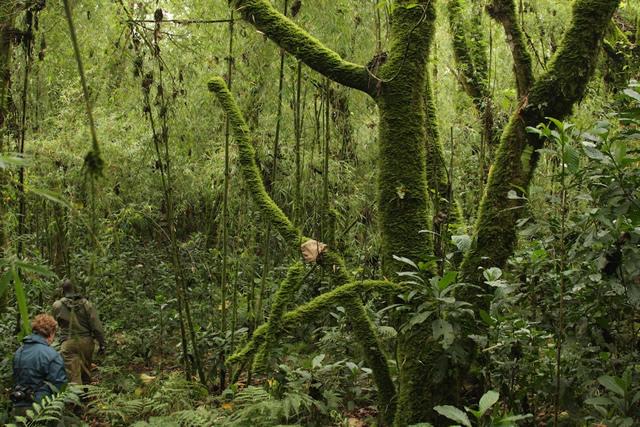 Rwanda (18)