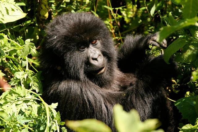 Rwanda (2)