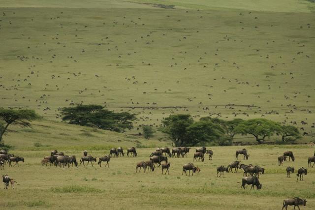 Tanzania 14