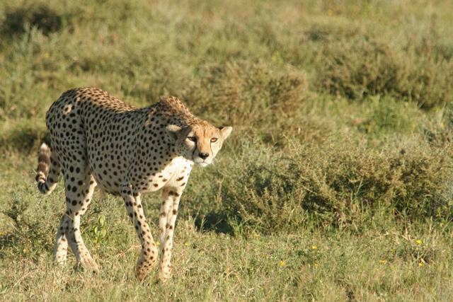 Tanzania 15