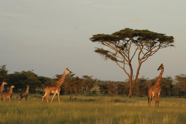 Tanzania 16