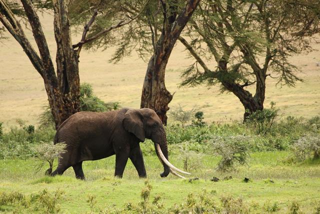 Tanzania 36