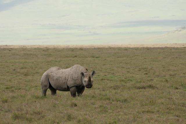 Tanzania 38