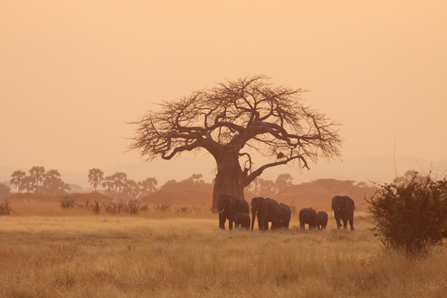 Tanzania 63