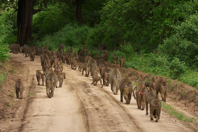 Tanzania 64