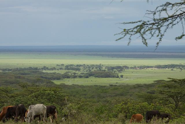 Tanzania 84