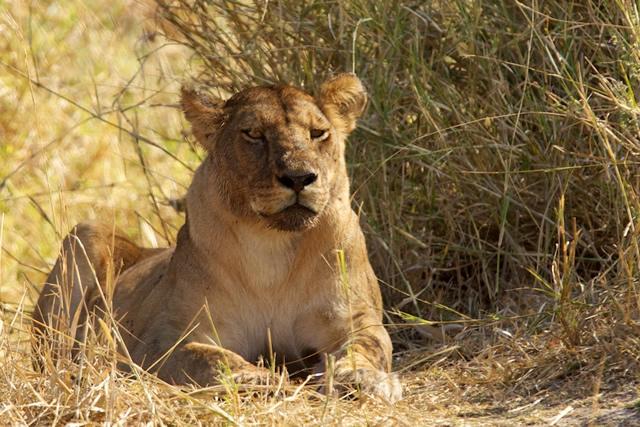 Tanzania 89