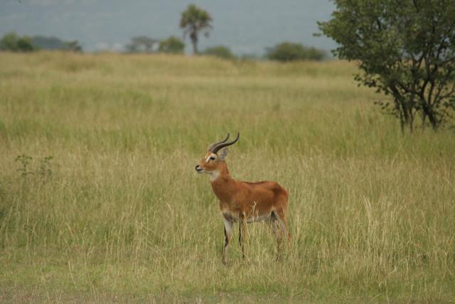 Uganda (2)