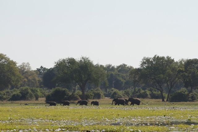 Zimbabwe (15)