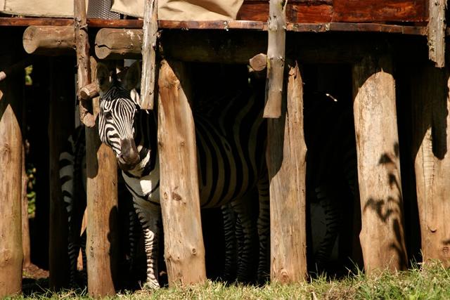 Ngorongoro Crater Lodge 9