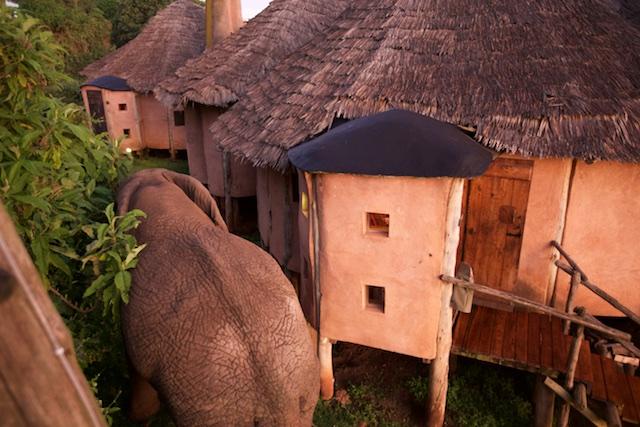 Elephant squeezes past the cottage