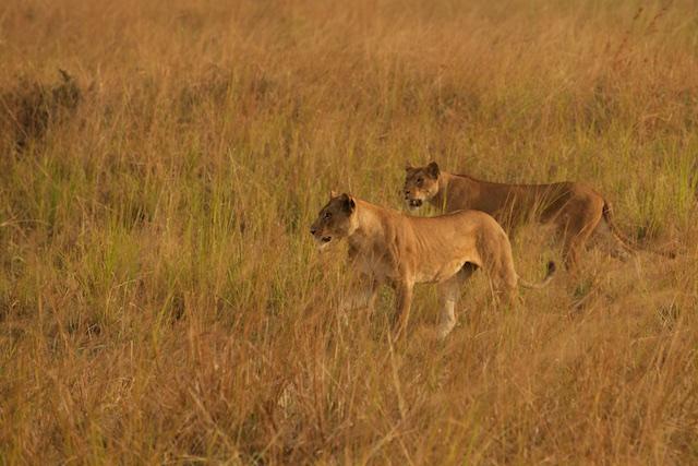 Lions reunited