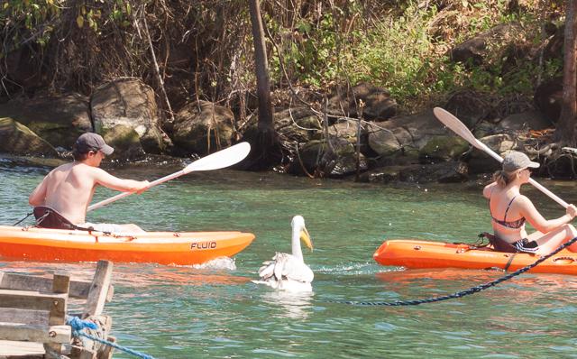 Big_bird on a kayak trip